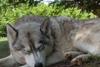 tineri husky-dog-copii-animale-dog-pește-vultur, pasăre fermă ausflugsziel-divertisment-tensiune