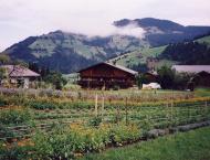 salcherhof-Auffach-Tirol-sadzīšana garšaugu dārza augiem veggie-biešu schoen dusmas