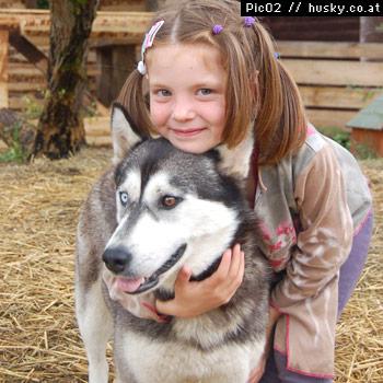 hunde-husky-huskyranch-schlittenhunde-huskytrack-tirol-austria-tierfarm-tiere-schlittenhunde-hundeschlitten
