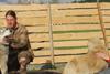 husky ferma Fun Park-copii-husky sania trasă de câini rasa husky-caine de sanie de curse de curse animale